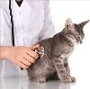 Ветеринарные клиники в Кизнере